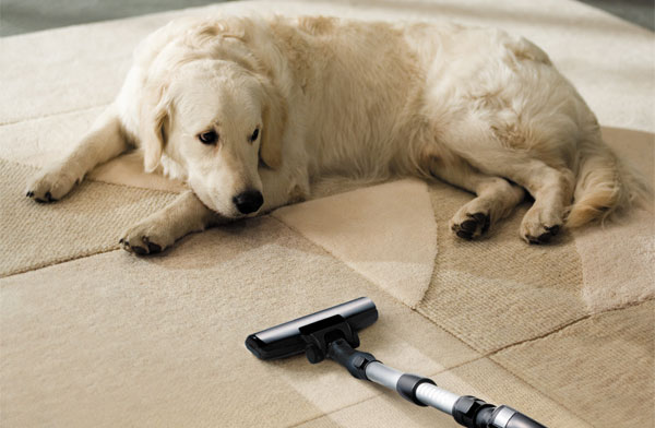 remove pet odor from carpet
